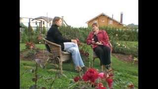 Сад и огород. Почвопокровные  розы.