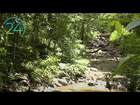 "Stream in Forest 17 Hrs. ""Real"" Nature Video and Sound - Dawn Till Dusk -Bonus: Fireflies!"