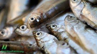 Konzumace ryb v souvislosti se zmenšováním mozku