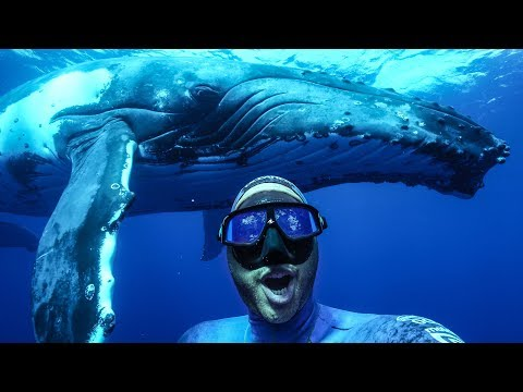 The BEST experience of my Life! Freediving with Humpbacks in Tonga Mp3