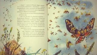 Сказки о животных, лесные истории #1 аудиосказка с картинками слушать