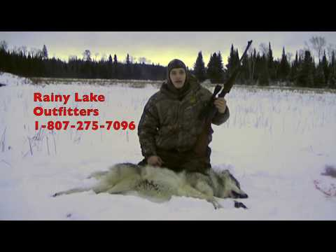 Ontario Guided Wolf Hunt