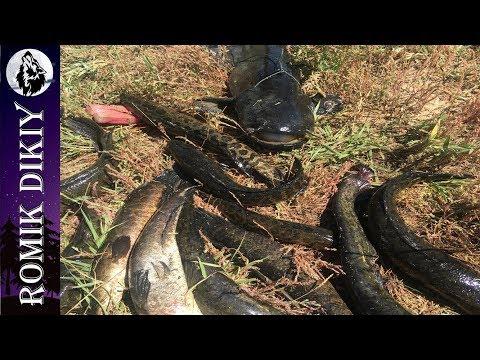 Рыбалка на р.Топар. Изобилие хищника. (6-8 июля 2018г) Часть 1