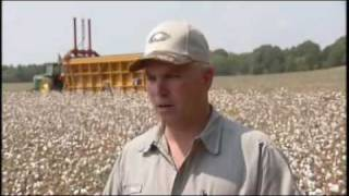Cotton Harvest in Alabama: America's Heartland Series