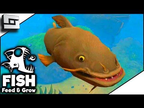 CATFISH RIVER! - FISH FEED AND GROW