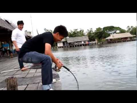 Giant Mekhong Catfish At Bungsamran Fishingpark Thailand Bangkok