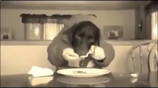 гибрид собаки и человека видео
