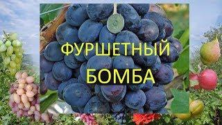 Виноград 2018. Виноград Фуршетный. Отзыв о винограде