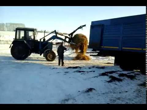 Погрузка КРС в скотовоз для перевозки скота! 89656176005