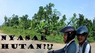 SEREEEMMM...!!! Ada Babi Hutan ??? Nyasar Nih Sampai ke Rangkas Bitung Serang Banten...