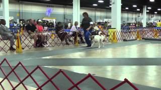 Cdca 7/27/12 Designated Specialty Winners Dog