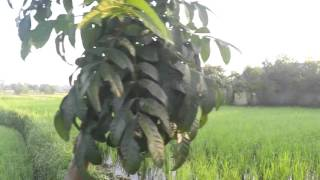 A walk and talk outside my subdivision Naga City Philippines part 2 of 3