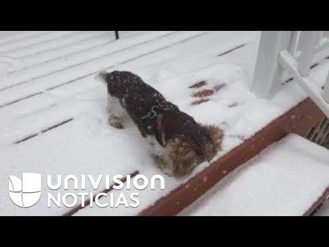 El videíto: La primera nevada de este perrito derretirá tu corazón