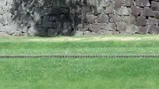 熊本城の長壁のところをツバメが飛んでいたので撮影しました。