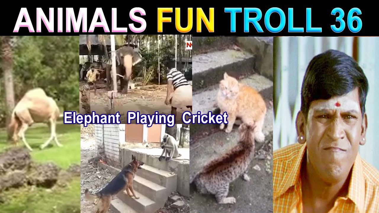 ANIMALS FUNNY VIDEO TAMIL TROLL PART 36 - NK TAMIL CHANNEL