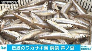 大正から続くワカサギ刺し網漁が解禁 箱根・芦ノ湖(19/10/01)