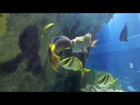 Cleaning Up: Spanish Hogfish And Stoplight Parrotfish