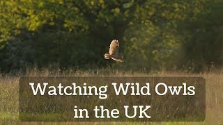 Watching Wild Owls in the UK
