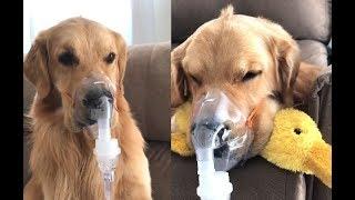 A Really Sick Dog