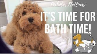 BATH TIME!  Cockapoo Dog 16 weeks old  VLOG 11