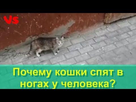 Вопрос: Почему кот спит на ногах только одного человека?