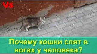 Почему кошки спят в ногах у человека?