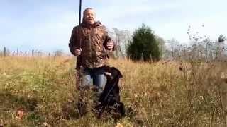 Quail Hunting With A Labrador Retriever