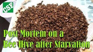 Dead Bee Hive Post Mortem 1