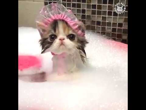 Sexy mačka výstrek