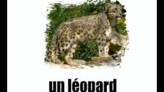 урок французского языка = животные   1