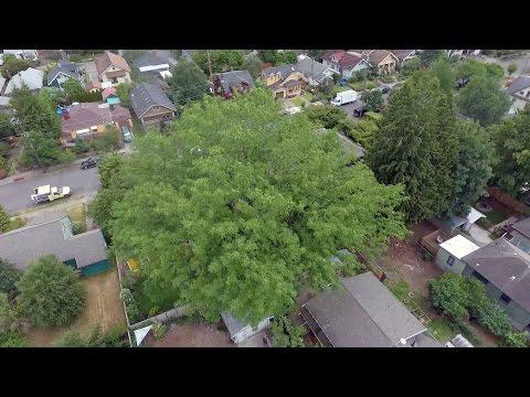 Honl Tree Care: Serving the Portland, Oregon, metro area since 2009