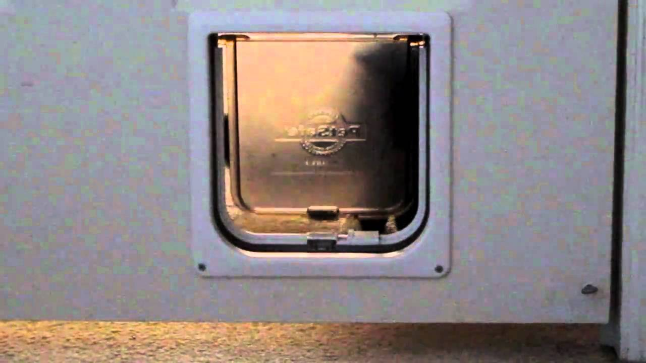 Cat learning to use cat door petsafe interior pet door youtube planetlyrics Images