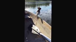 Guy catches bird out of mid air while fishing.