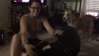 Download Video Girl and dog have fun time MP3 3GP MP4