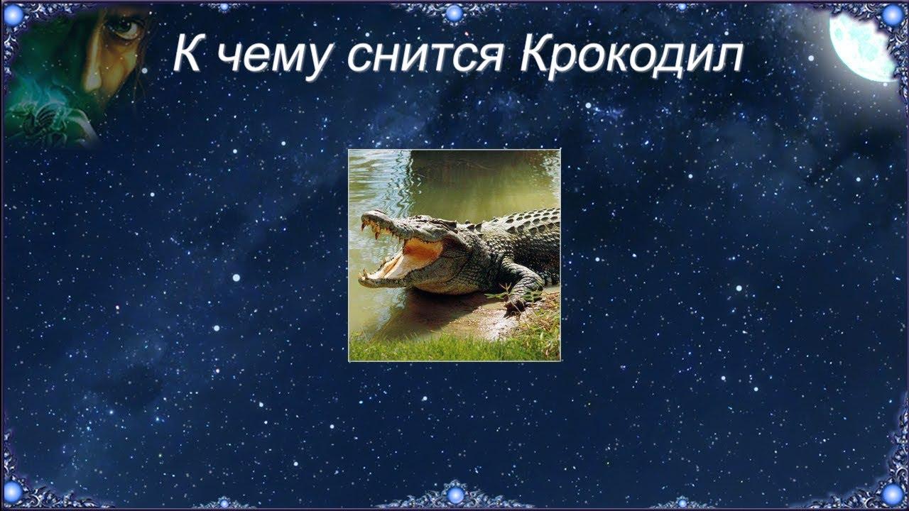 К чему снится Крокодил (Сонник)
