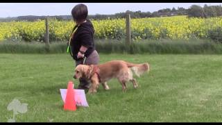 Talking Dogs Rally | Fun Dog Training | Www.watchmychops.com