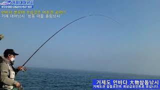 거제대어낚시 참돔낚시~먼바다 본류대 대물 참돔낚시 조황