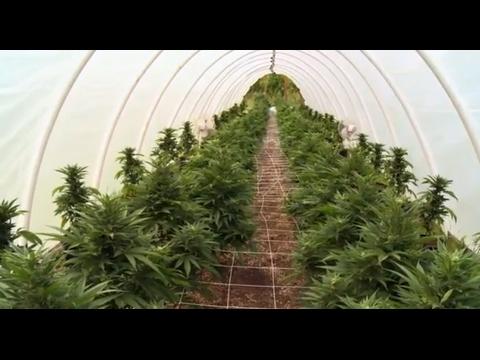 Marijuana America Illegale: Spaccio (ITA)