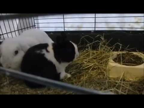 New Lethal Rabbit Disease! Rhd2   How To Protect Your Bunny