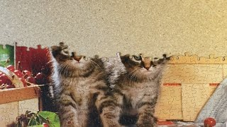 Cutest Kittens Ever!  Cute Adorable Kitty Puzzle!  by Kid Vids!