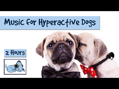 2.5 Hours of Soothing Music to Calm Down and Relax Hyperactive Dogs
