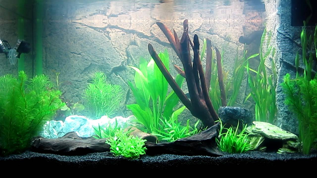 aquarium juwel rio 125 noch ohne fische youtube. Black Bedroom Furniture Sets. Home Design Ideas