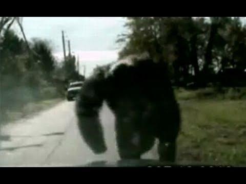 Crazy Chimp Atttack Caught On Tape!