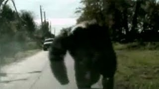 Crazy Chimp Atttack Caught On Tape!
