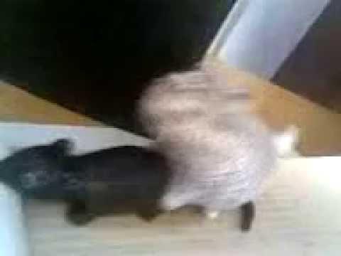 Мыши и коты порно
