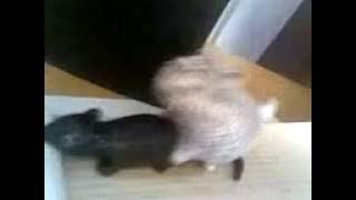 Порно кота и мыши.3gp