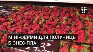 Міні-ферми для полуниць. Бізнес-план