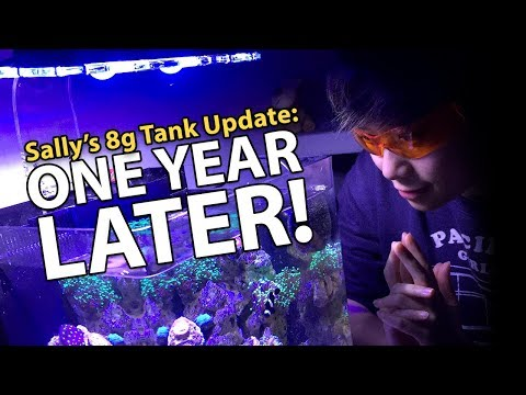 Sally's Nano Tank 1 YEAR UPDATE!! (8g – 11/15/2017)