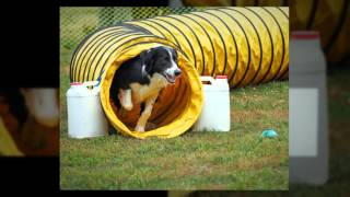 2016 Triad Dog Games May 14-15, Winston-Salem Fairgrounds thumbnail