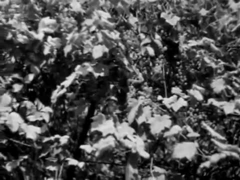 Imagini rare cu Constantin Brâncuşi filmat la lucru